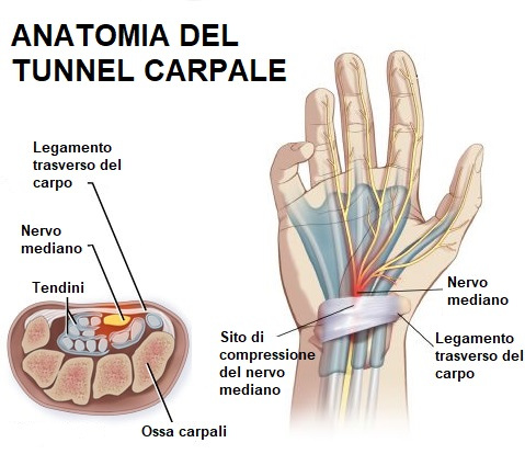 anatomia tunnel carpale