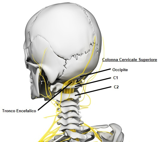 Mal di testa da cervicale che cos la cefalea cervicogenica for Mal di testa da cervicale quanto puo durare